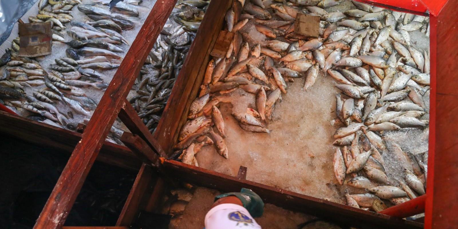 Ibama - Apreensão de peixes e doação ao Mesa Brasil